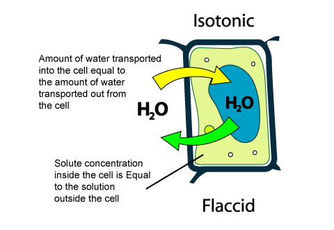 Cell Membrane Diagram Label further Units Life as well Cellsandtheirfunctions further Torontosaurus org 28 simple Eukaryotic Cell Diagram 44 also Types Of Solution Isotonic. on animal cell membrane diagram