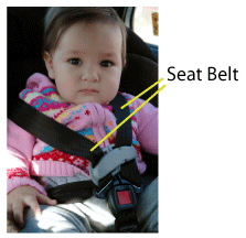 Form 4 -notes [chapter 1 &2 ] Seatbelt
